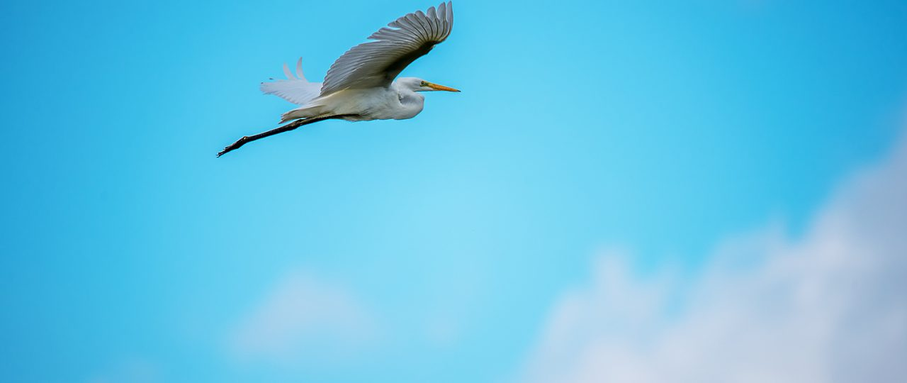 cloudscape-with-great-white-heron-flying-kemeri-national-park-july-2016-sm-3784