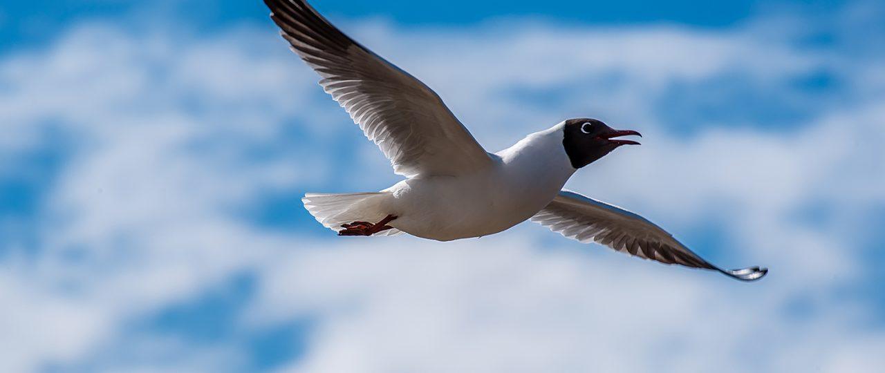 seagull-jurmala-sm-9462