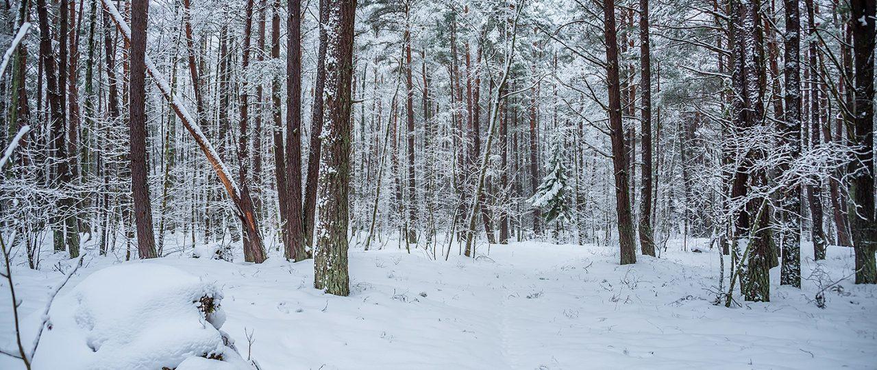 Meditative Forest