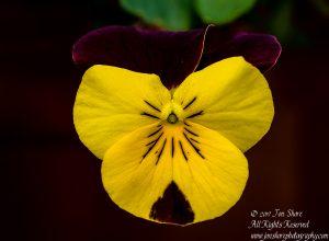 macro of flower latvia