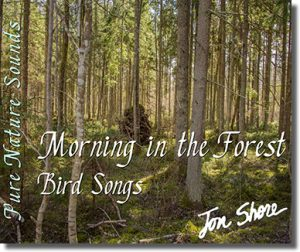 bird song recording in a forest