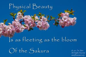 physical beauty haiku